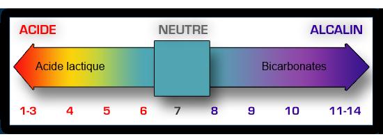 Echelle pH